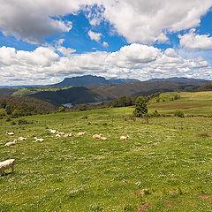 "фото ""Highlands of Tasmania"""