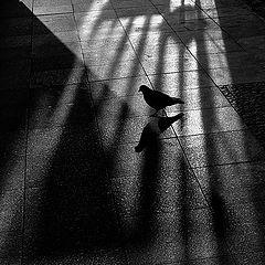 """photo """"Света, тени и голубь"""""""