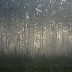 """фото """"Берегите лес"""""""