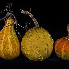 """photo """"Pumpkin assortment"""""""