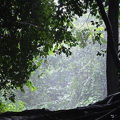 """фото """"Тропический дождь"""""""