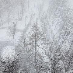 "photo ""Snow in my yard"""