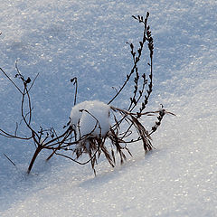 "photo ""winter bush"""