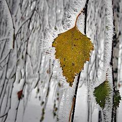"""фото """"Между осенью и зимой"""""""