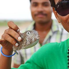 """фото """"Сказка о рыбаках и рыбках"""""""