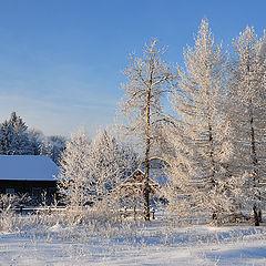 """фото """"Пришла зима"""""""