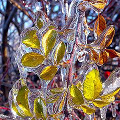 """фото """"Winter jewel"""""""