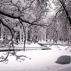 """фото """"Кружева  снегопада"""""""