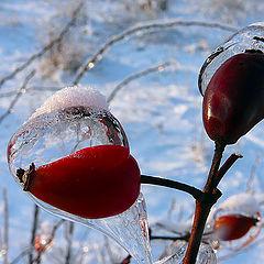"фото ""Ice drops"""