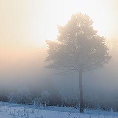 "фото ""Фрагмент зимнего утра"""