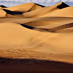"""фото """"Amidst the Dunes"""""""