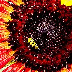 """photo """"Red Sunflower with Green Beetle"""""""