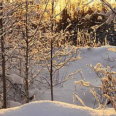 "фото ""Зимы сияние"""