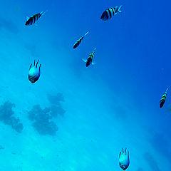 "photo ""Red Sea"""