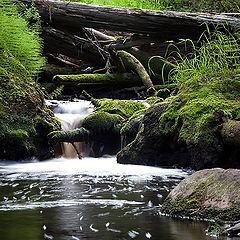 """фото """"Лесной ручей."""""""