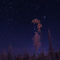 "фото ""Зимняя ночь."""