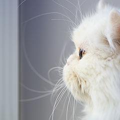 """фото """"Кошки умеют ждать..."""""""