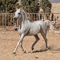 """фото """"Arabian beauty # 3"""""""