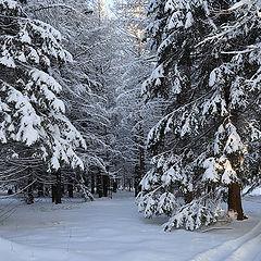 """фото """"Притихший лес"""""""