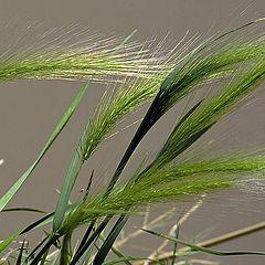 """photo """"Rio Grande Grasses"""""""