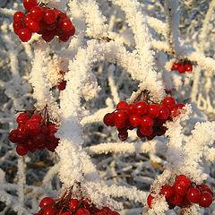 """фото """"Berries"""""""