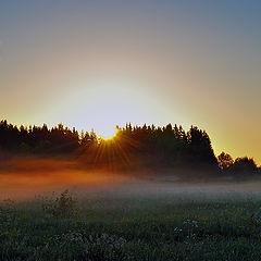 """фото """"Проснувшееся солнце."""""""