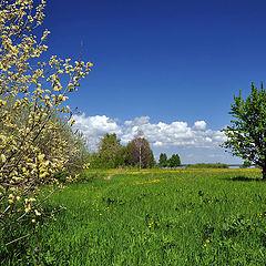 """фото """"Зеленый цвет весны"""""""