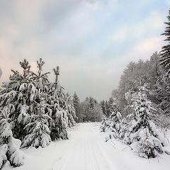 """фото """"Краски зимнего леса"""""""