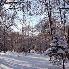 "фото ""После  январского  снегопада..."""
