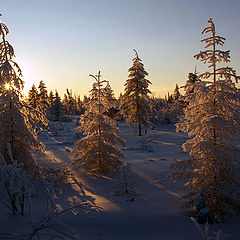 """фото """"Морозный вечер"""""""