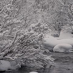"""фотоальбом """"Природа севера"""""""
