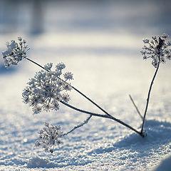 "photo ""Winter Flowers"""