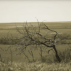 """фотоальбом """"Одинокие деревья."""""""