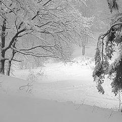 "фото ""Снег, снег..."""