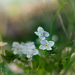"""фото """"маленькие цветы"""""""