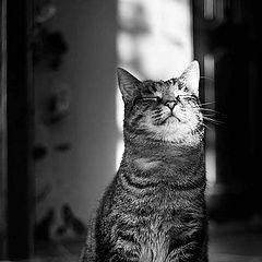 """photo """"Smiling cat"""""""