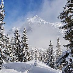 """photo """"Grindelwald"""""""