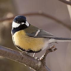"""фото """"Одна маленькая, но гордая птичка"""""""
