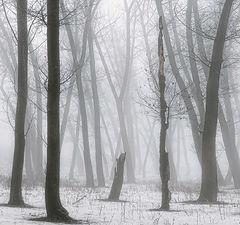 """фото """"Зимний туман"""""""