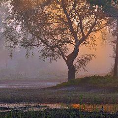 "фото ""GOOD MORNING"""