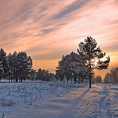 """фото """"В рассветном лесу"""""""