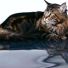 "фото ""Коте, студия."""