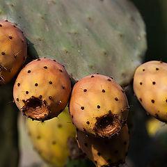 """фото """"Cactus 01"""""""