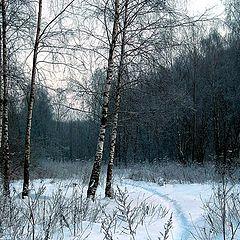 "фото ""Хорошо зимой..."""