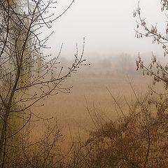 """фото """"Весенний этюд с моросящим дождиком"""""""
