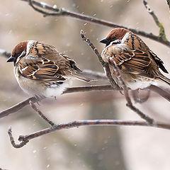 """фото """"Холодный март 2013"""""""