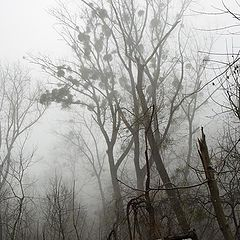 """фото """"Гора мъглива"""""""