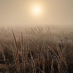 """фото """"Осень. Первые заморозки."""""""