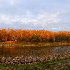 "фото ""Лесное озеро..."""