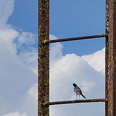 """фото """"Лестница в небо"""""""